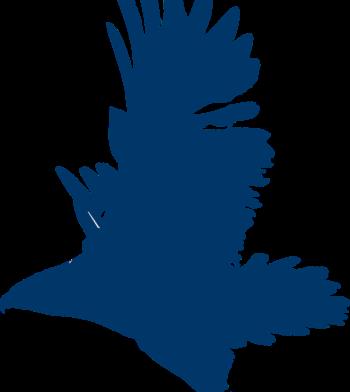 blue falcon icon